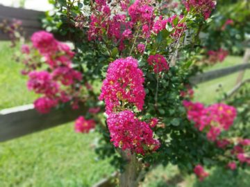 galaxy s7 active pink flowers