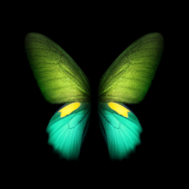 You can download the Live Wallpapers from the Galaxy Fold ...